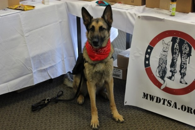 Service dog Axel. (Credit: Francesca Collins)