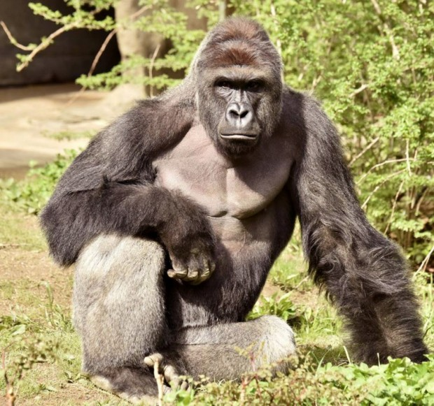 (REUTERS/Cincinnati Zoo/Handout via Reuters)