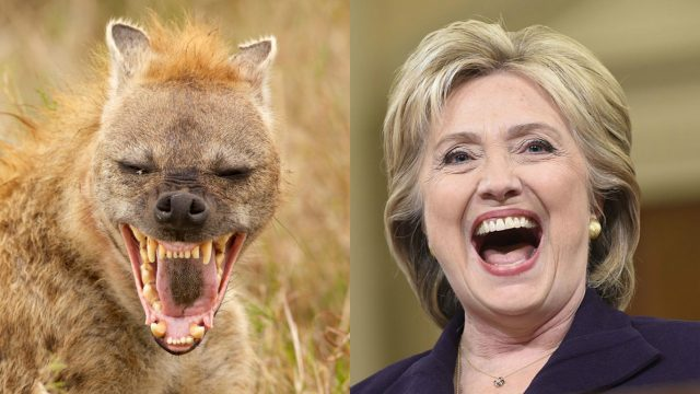 HIllary Clinton hyena