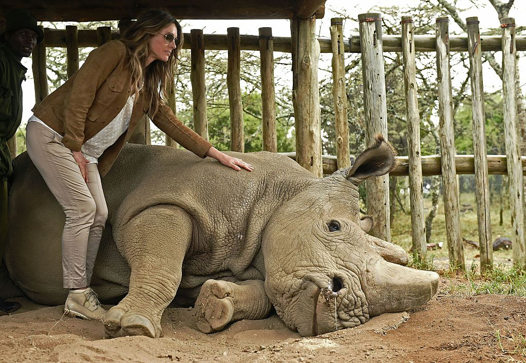 British actress/model Elizabeth Hurley with the world's last male northern white rhino at Ol Pejeta Conservancy [Photo: Carl De Souza/AFP/Getty Images]