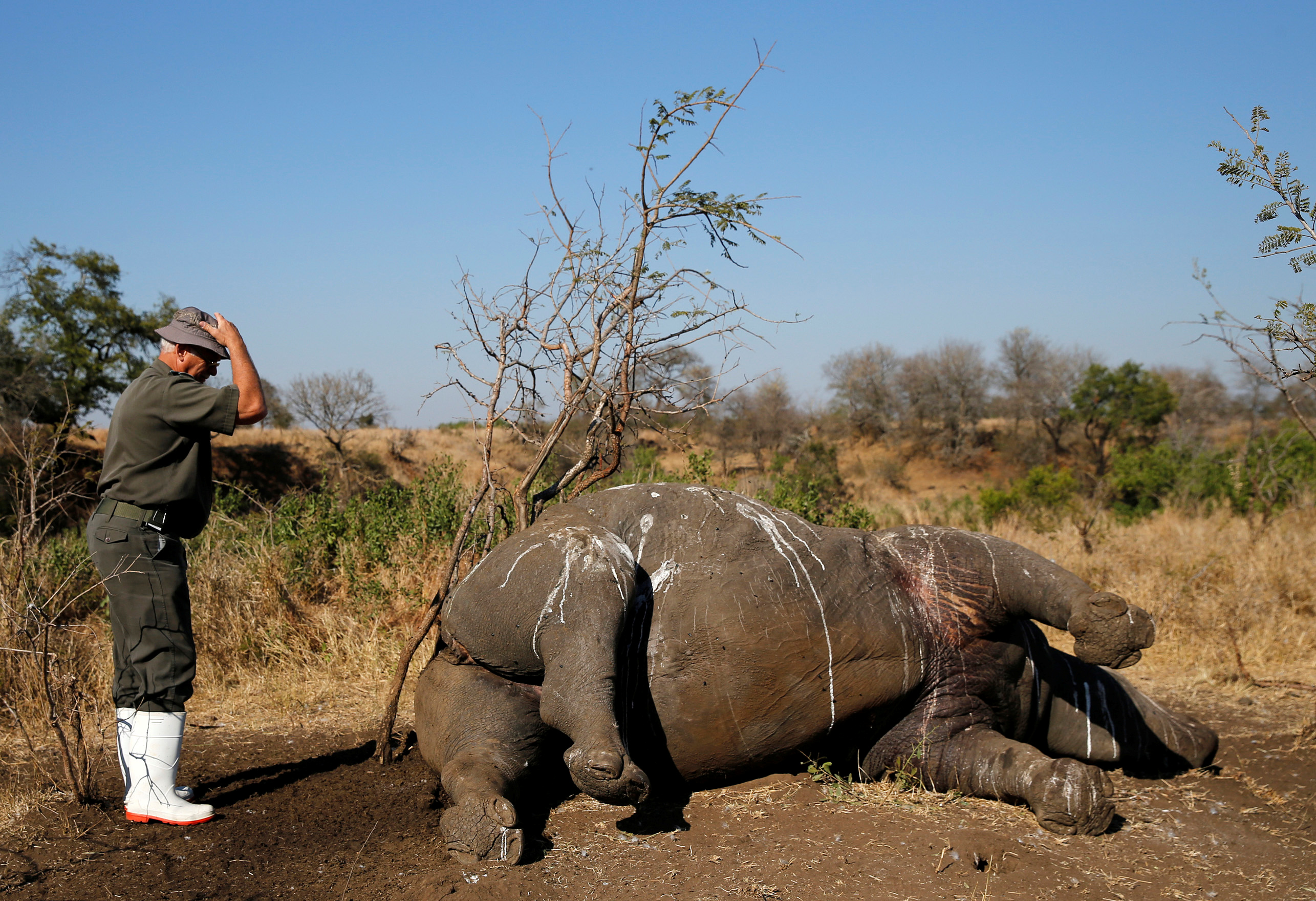 A rhino left dead in South Africa's Kruger National Park after being killed for its horn by poachers (Photo: Reuters)