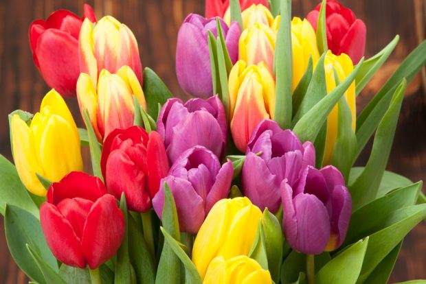 Tulips are a great Mother's Day arrangement (Photo via Shutterstock)