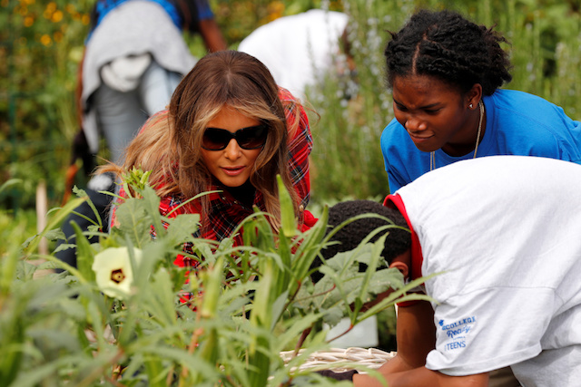 U.S. First Lady Melania Trump picks okra in the White House kitchen garden with children from the Boys and Girls Clubs of Greater Washington, at the White House in Washington, U.S. September 22, 2017. REUTERS/Jonathan Ernst