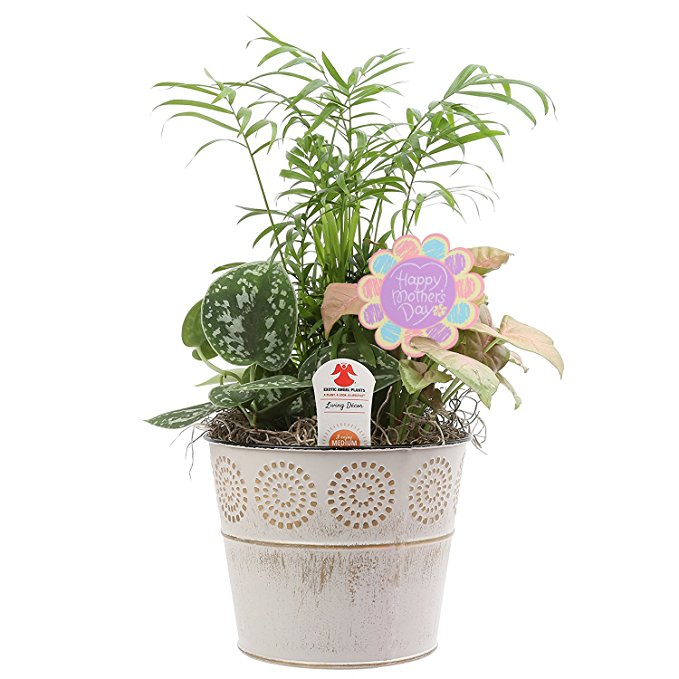 Normally $44, this dish garden planter is 18 percent off (Photo via Amazon)