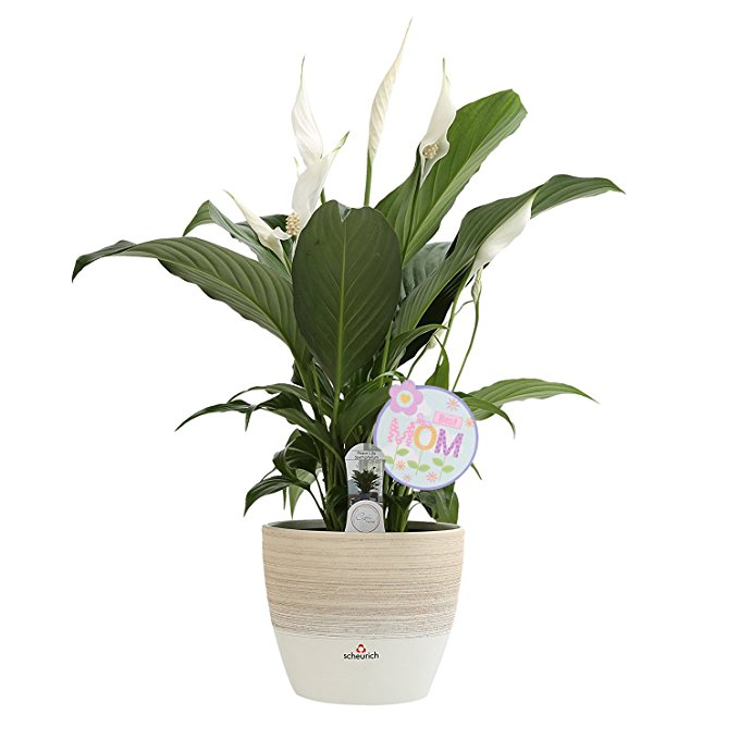 Normally $40, this lily planter is 25 percent off (Photo via Amazon)